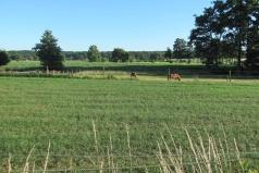 De Dijk, locatie voormalig kasteel De Horst